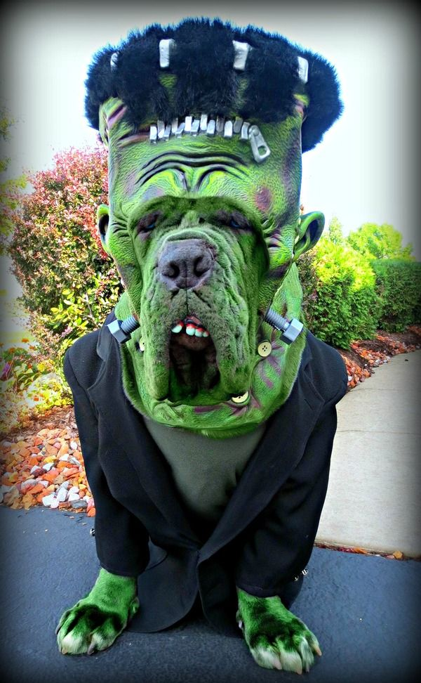 funny police source it s the guac dog halloween costume contest rufio
